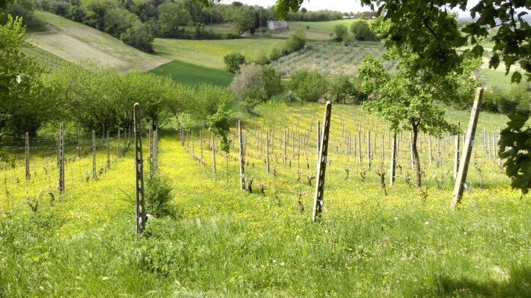 agricoltura biologica naturale conservativa